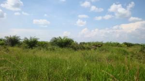 Batas Sebelah Barat : Kebun Kelapa Sawit